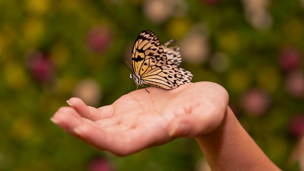 Close-up view of butterfly sitting on hand