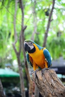 Close up view of colorful amazon macaw bird