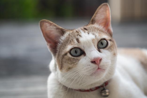 Close up view of a cute cat, selective focus.