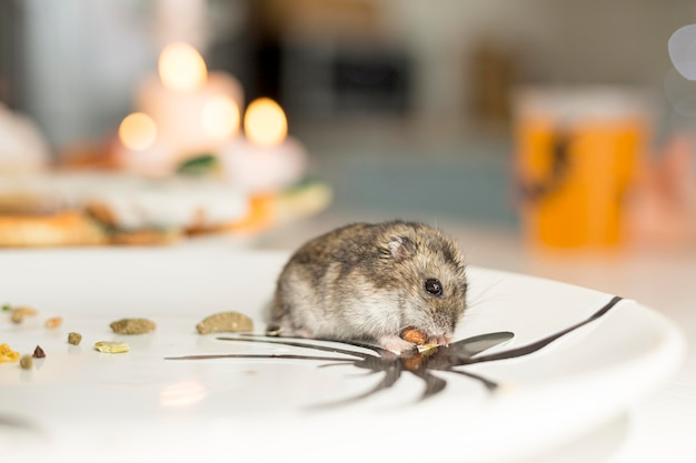 Close-up view of cute hamster on a plate