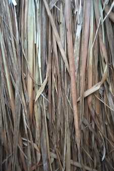 Close up view, dry straw thatch roof of traditional
