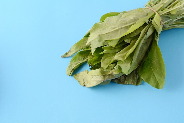 Close up view of fresh arugula leaves