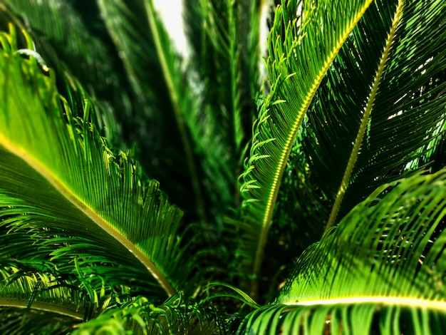 Close-up view of fresh green palm tree leaf. selective focus.
