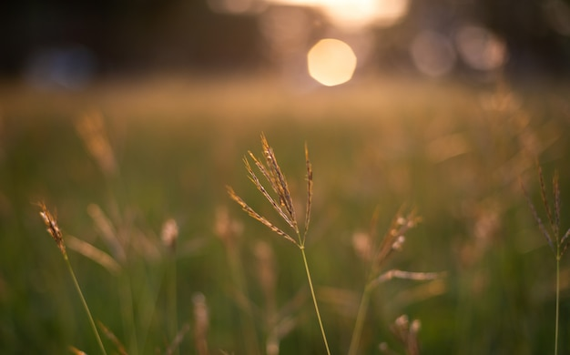 Close-up view of grass in field