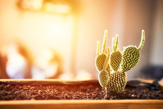 Close up view of green succulent in a clay pot in loft interior in cafe. image with small field of depth. photo with copyspace and light flare for text and design