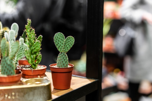 Close up view of green succulent in a clay pot in loft interior in scandinavian style
