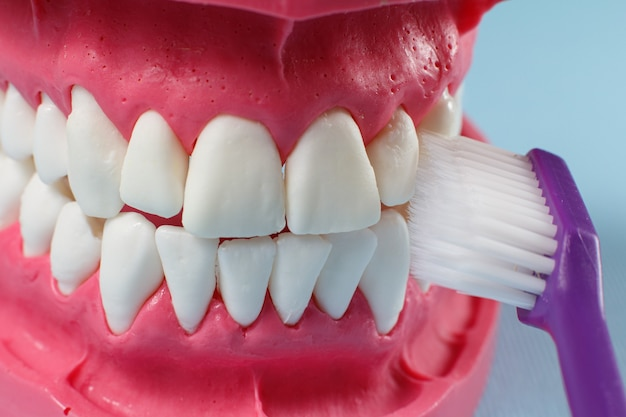 Close-up view of a human jaw layout and a toothbrush on the blue background.