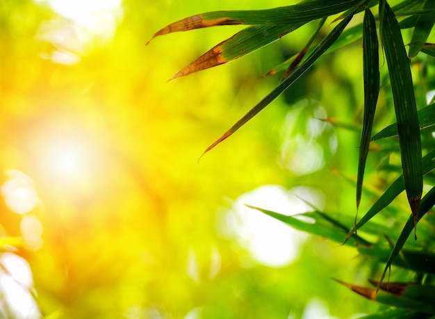 Close up view of nature bamboo leaves on blurred greenery tree background with sunlight