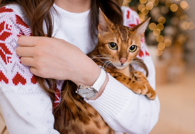純血種の猫を抱いている女の子の拡大図。カメラを見ている猫
