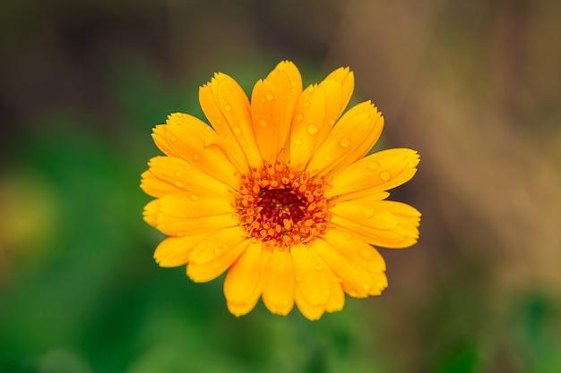 정원에서 오렌지 꽃의 보기를 닫습니다.