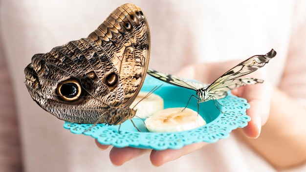 Крупным планом вид красивой бабочки концепции