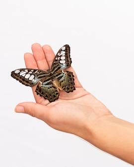 Крупным планом вид красивой бабочки под рукой