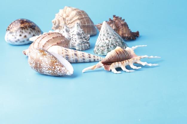 Крупным планом вид большой морской раковины на простой синий