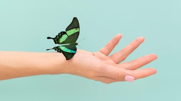 반면에 앉아 나비의 클로즈업보기
