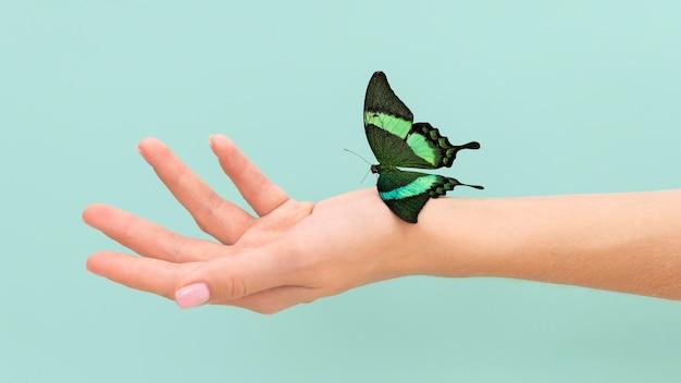 Крупным планом бабочка сидит под рукой