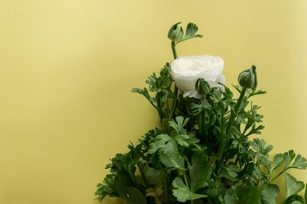텍스트에 대한 따뜻한 노란색 배경 공간에 섬세한 흰색 봄 꽃의 보기를 닫습니다