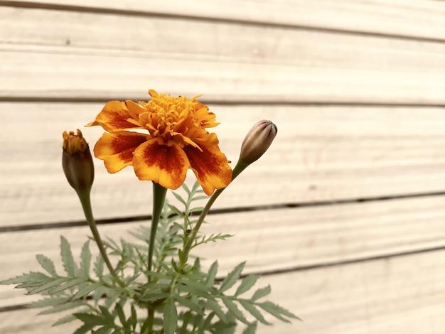 Bokeh 효과 배경으로 꽃의 근접 촬영보기 프리미엄 사진