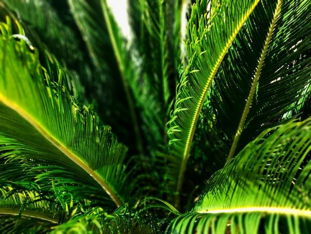 Взгляд конца-вверх свежих зеленых лист пальмы. выборочный фокус.
