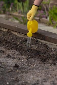 屋外の庭の上げられたベッドの土の植物に水をまく庭師のクローズアップ表示
