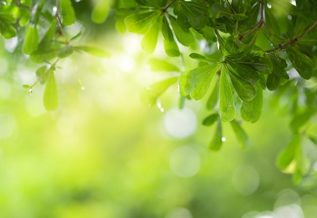 緑の背景をぼかし、自然の緑の植物を使用して庭で日光の緑の葉のクローズアップ表示