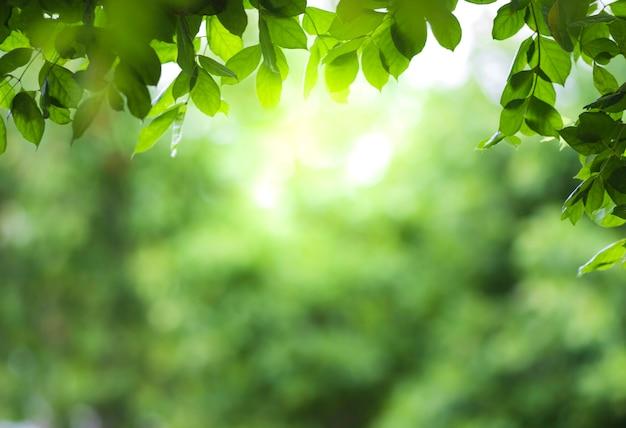 자연 녹색 식물에 사용하는 정원에서 녹지 흐린 배경과 햇빛에 녹색 잎의 뷰를 닫습니다