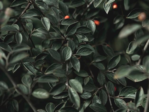 緑の葉の概念のクローズアップビュー
