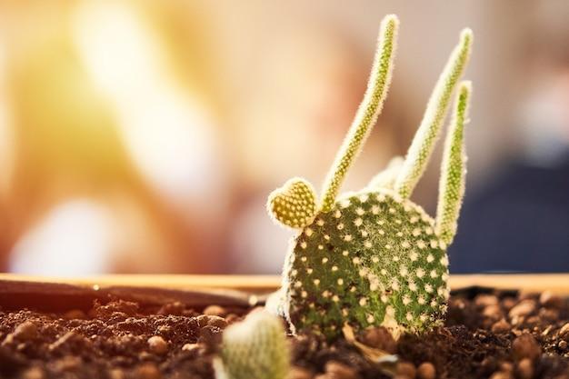カフェのロフトのインテリアで土鍋でハート形の緑の多肉植物のクローズアップ表示。奥行きの小さい画像。