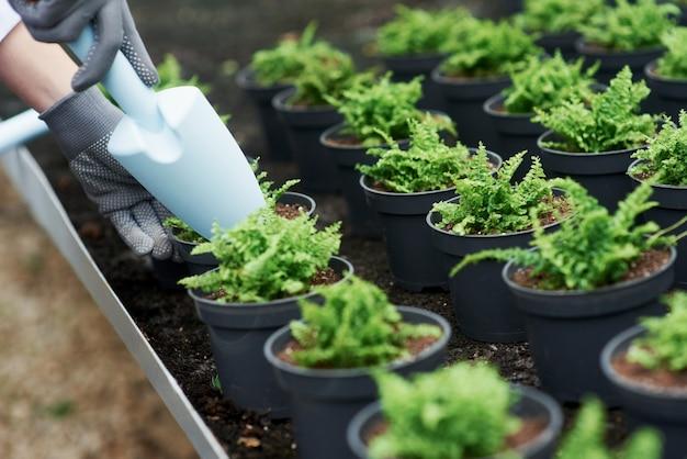 Крупным планом вид рук в перчатках, работающих с растениями в горшках.