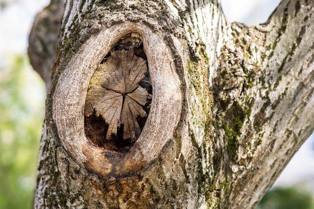 古い切り刻まれた木の枝のビューを閉じます。