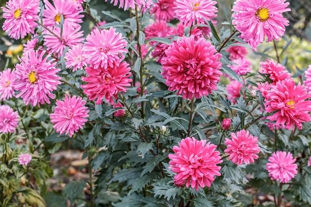 ピンクの花の背景のクローズアップビュー
