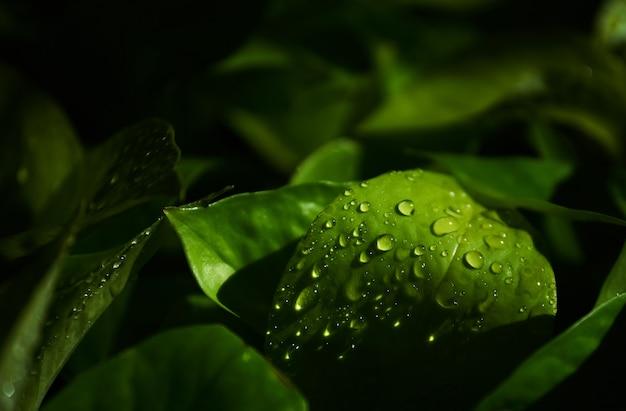 緑の葉の雨滴のクローズアップビュー