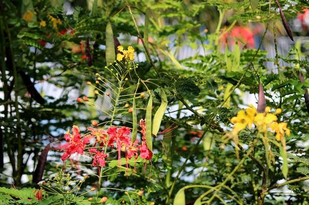 Крупным планом вид цветов павлина.