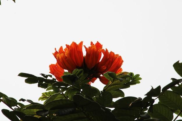 野生の花のクローズアップビュー