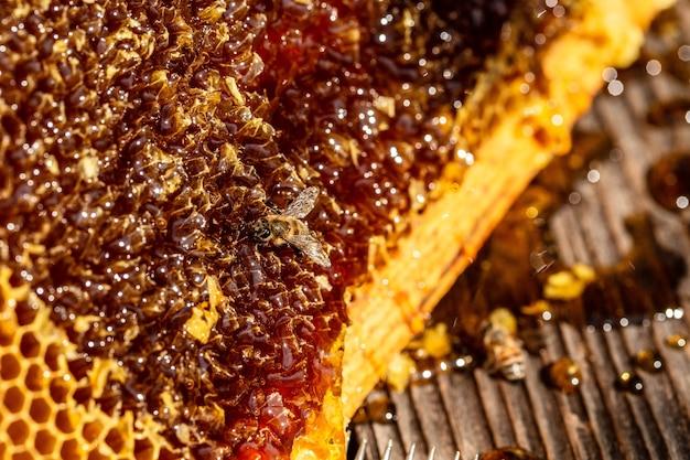 꿀 세포에 일하는 꿀벌의보기를 닫습니다