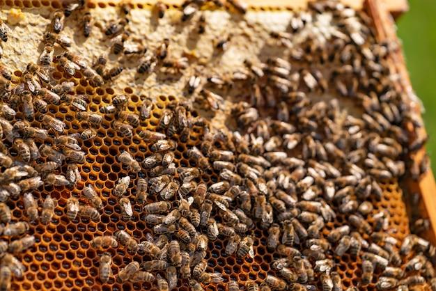 Крупным планом вид работающих пчел на медовых ячейках