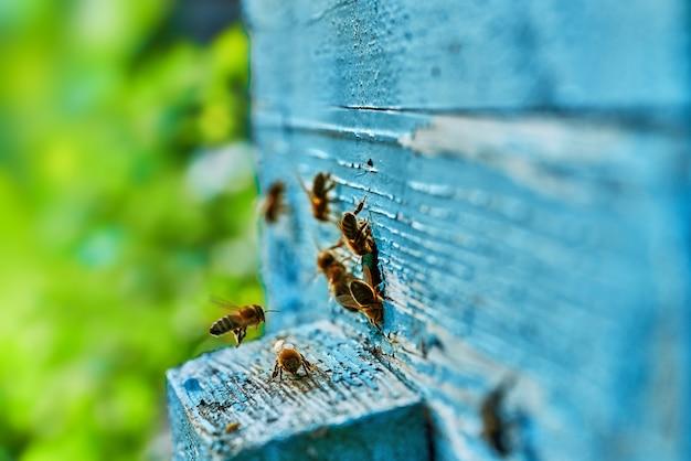 달콤한 꿀 벌집에 작업 꿀벌의 뷰를 닫습니다. 꿀은 양봉을 건강하게합니다. 벌꿀은 노란색의 아름다운 벌집에 모였습니다.