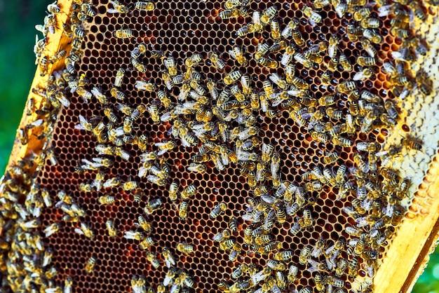 달콤한 꿀 벌집에 작업 꿀벌의 뷰를 닫습니다. 꿀은 양봉을 건강하게합니다.