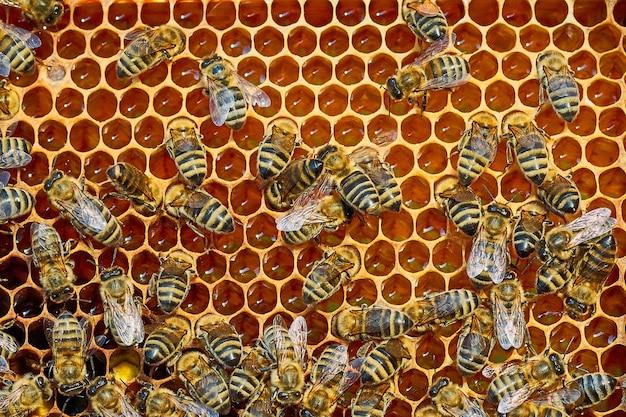 달콤한 꿀 꿀이 있는 벌집에서 일하는 꿀벌의 클로즈업 보기는 건강을 유지하는 것입니다