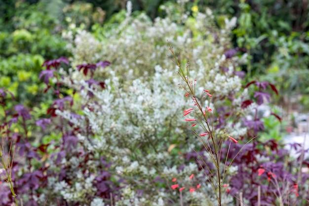 柔らかいボケ味の背景をぼかす植物園の小さな赤い花の木のクローズアップビュー