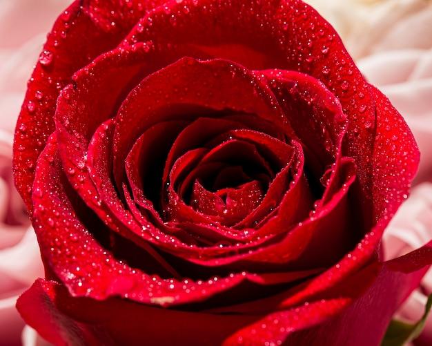 バレンタインのクローズアップ;バラと日のコンセプト