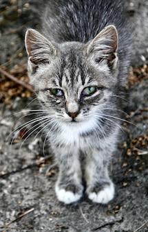 매우 슬픈 줄무늬 고양이의 근접 촬영보기