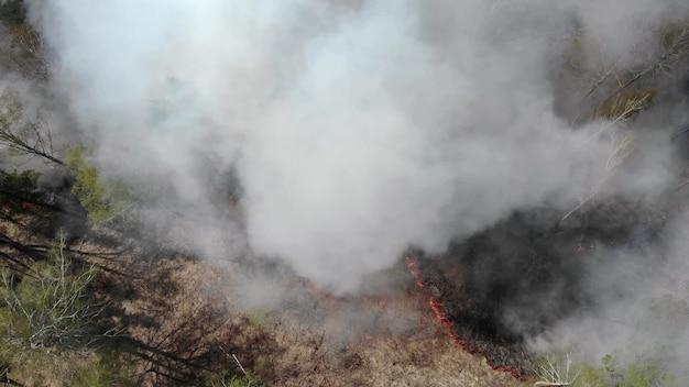 산불, 산불의 불길을 퍼뜨리는 뷰를 닫습니다. 자연 재해, 기후 변화, 지구 적 지렁이. 화재, 산불, 연기와 화염에 불타는 잔디밭. 지구 개념