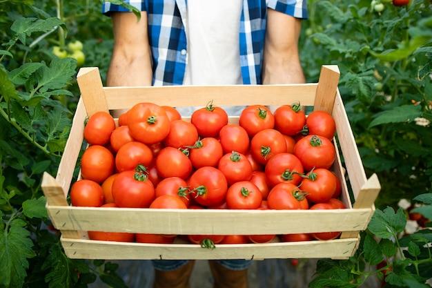 Крупным планом вид деревянный ящик, полный красных вкусных томатных овощей