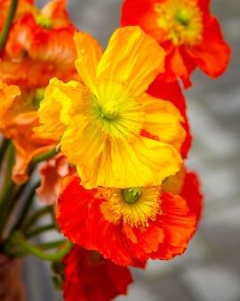 노란 아네모네 꽃 꽃다발을 볼을 닫습니다