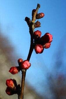明るい青い春の空の背景を垂直に桜の枝の花のビューを閉じます。