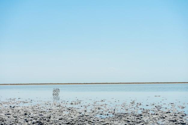 Крупным планом вид на интересный пейзаж с соленым озером сиваш и лечебной грязью. пляж с необычной текстурой для планеты земля. космический пейзаж. концепция путешествия фото.