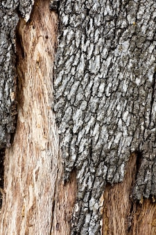 Close up view of a quercus suber tree bark texture.