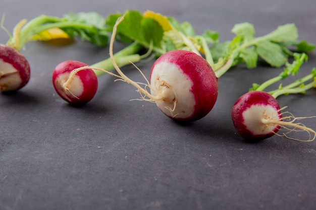 Close-up view of radishes on maroon background with copy space