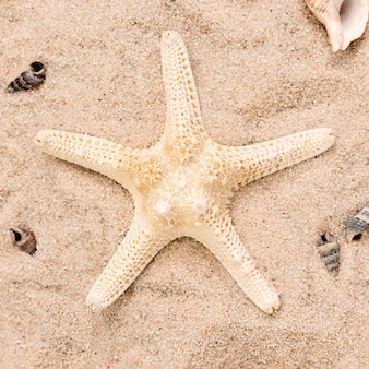 Close-up view of starfish on sand