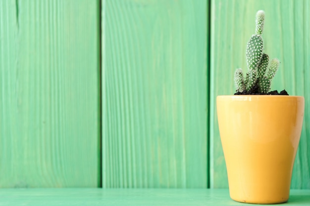 Close up view of a succulent against green wooden background